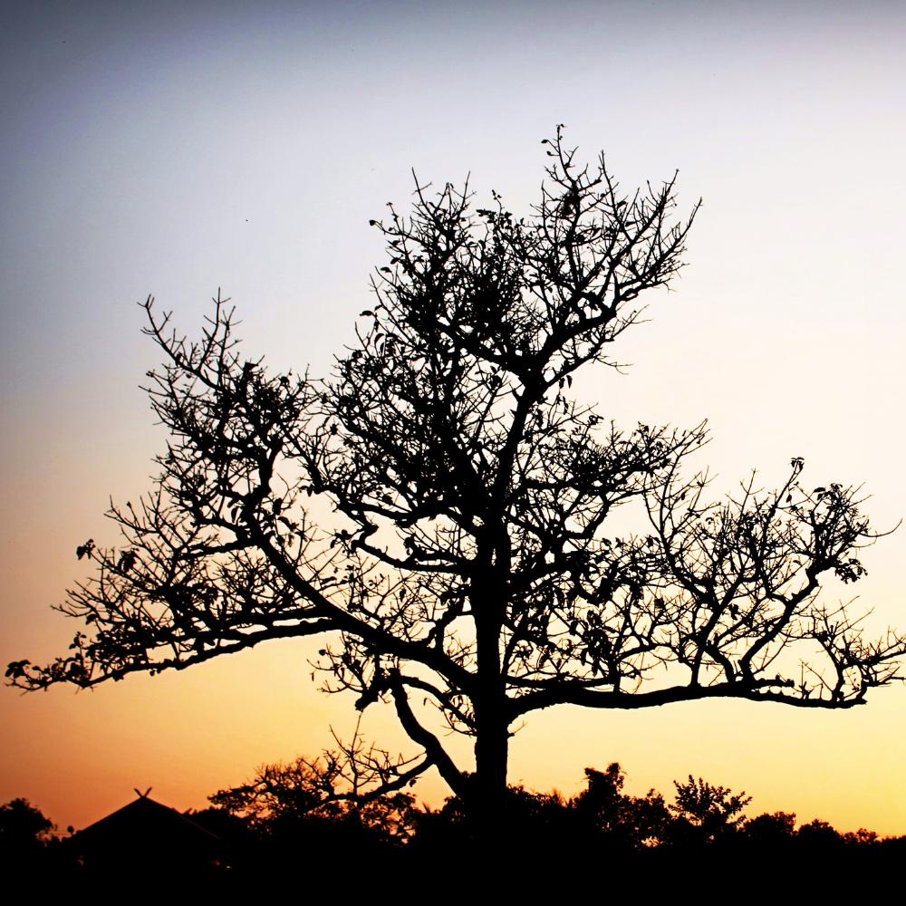 Az életfa és ami mögötte van, érdemes hordanom életfa medált?